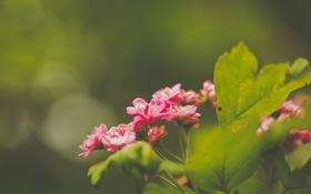Обои листья, цветы, лепестки, зеленые, розовые