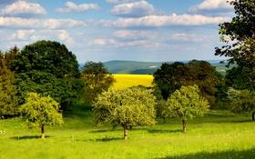 Обои трава, деревья, Германия, Клоттен, зелень, поля