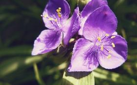 Картинка макро, Цветы, красивые