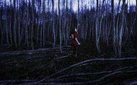 Обои ночь, девушка, лес