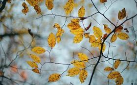 Картинка цвет, листья, осень, фон, природа