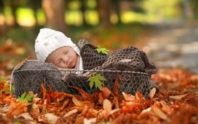 Картинка осень, корзина, младенец