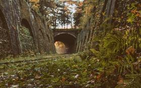 Обои листья, деревья, мост, стены, куст, солнечный свет, железнодорожные