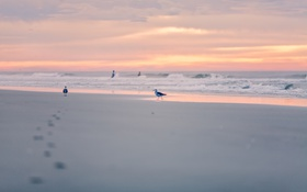 Обои птицы, закат, море