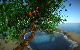 Обои море, листья, дерево, коллаж, плоды