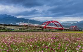 Обои поле, пейзаж, мост, поезд, Тайвань