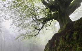 Обои природа, лес, дерево
