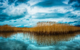 Картинка небо, облака, озеро, отражение, растение