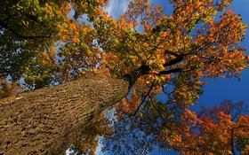 Обои осень, небо, листья, дерево, ствол, крона