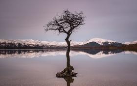 Обои небо, снег, горы, озеро, отражение, дерево, ветви