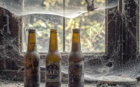 Обои пиво, паутина, окно, бутылки