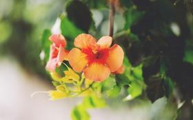 Обои листья, цветы, лепестки