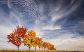 Обои краски, деревья, листья, небо, осень
