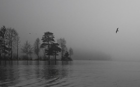 Картинка деревья, полет, птицы, туман, озеро, островок, дождливый