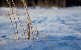 Картинка зима, трава, макро, снег, блеск