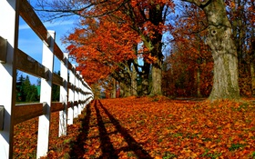 Обои fall, path, walk, leaves, autumn, park, nature