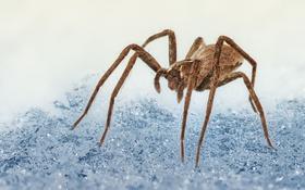 Обои макро, природа, паук