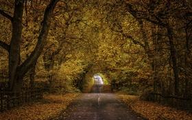 Обои дорога, осень, листья, деревья, ветки, листва, забор