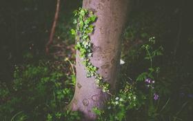 Обои дерево, трава, лес, растение