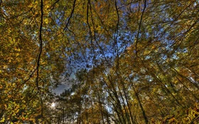 Обои лес, небо, деревья, природа