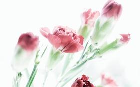 Картинка blossom, pastel, plant