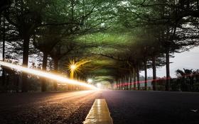 Картинка дорога, деревья, огни