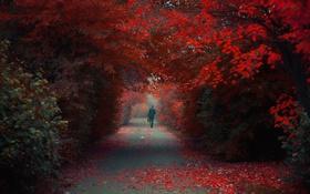 Картинка осень, парк, человек