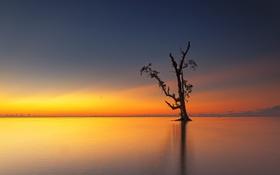 Картинка отражение, дерево, озеро, зеркало, сумерки, горизонт, облака