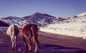 Обои зима, дорога, небо, снег, горы, тень, лошади