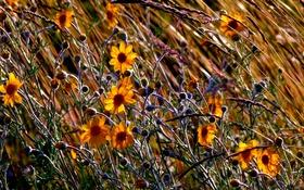 Картинка поле, осень, трава, цветы, луг