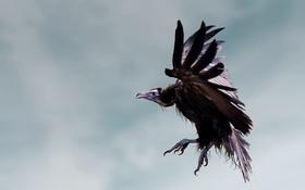 Картинка sky, flying, Bird, dirty, ugly, gastly