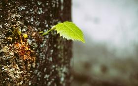 Обои зеленый, дерево, листок