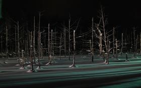 Картинка зима, лес, свет, снег, деревья, ночь, тень