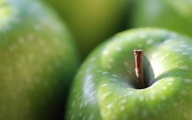 Обои макро, яблоко, фрукты
