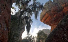 Обои деревья, скалы, Бразилия, штат Парана, Понта-Гросса