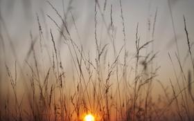 Обои трава, восход, стебли
