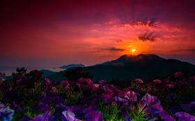 Обои закат, горы, цветы