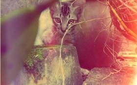Обои взгляд, котёнок, полосатый, cat, cute, pet, kittens