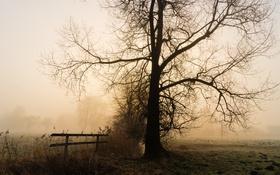 Обои туман, утро, скамья