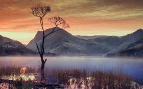 Обои дерево, небо, озеро, горы, облака