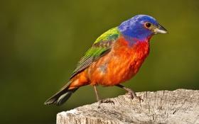 Картинка птица, цвет, пень, перья