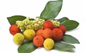 Обои листья, природа, ягоды, плоды