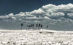 Обои песок, облака, ветер, осел, кокосовые пальмы