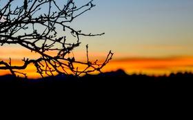 Обои закат, горы, дерево, ветви, силуэт