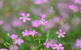 Картинка макро, растение, лепестки, сад, луг