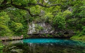 Картинка зелень, деревья, скала, озеро, парк, США, кусты