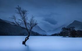 Картинка горы, озеро, дерево, Великобритания, Уэльс. Национальный парк Сноудония