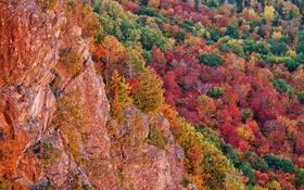 Обои Чиппева, деревья, багрянец, скалы, Мичиган, осень, лес