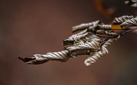 Обои листья, ветка, природа