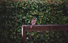 Обои листья, скамейка, перья, воробей